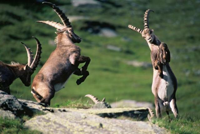 Austrian National Park